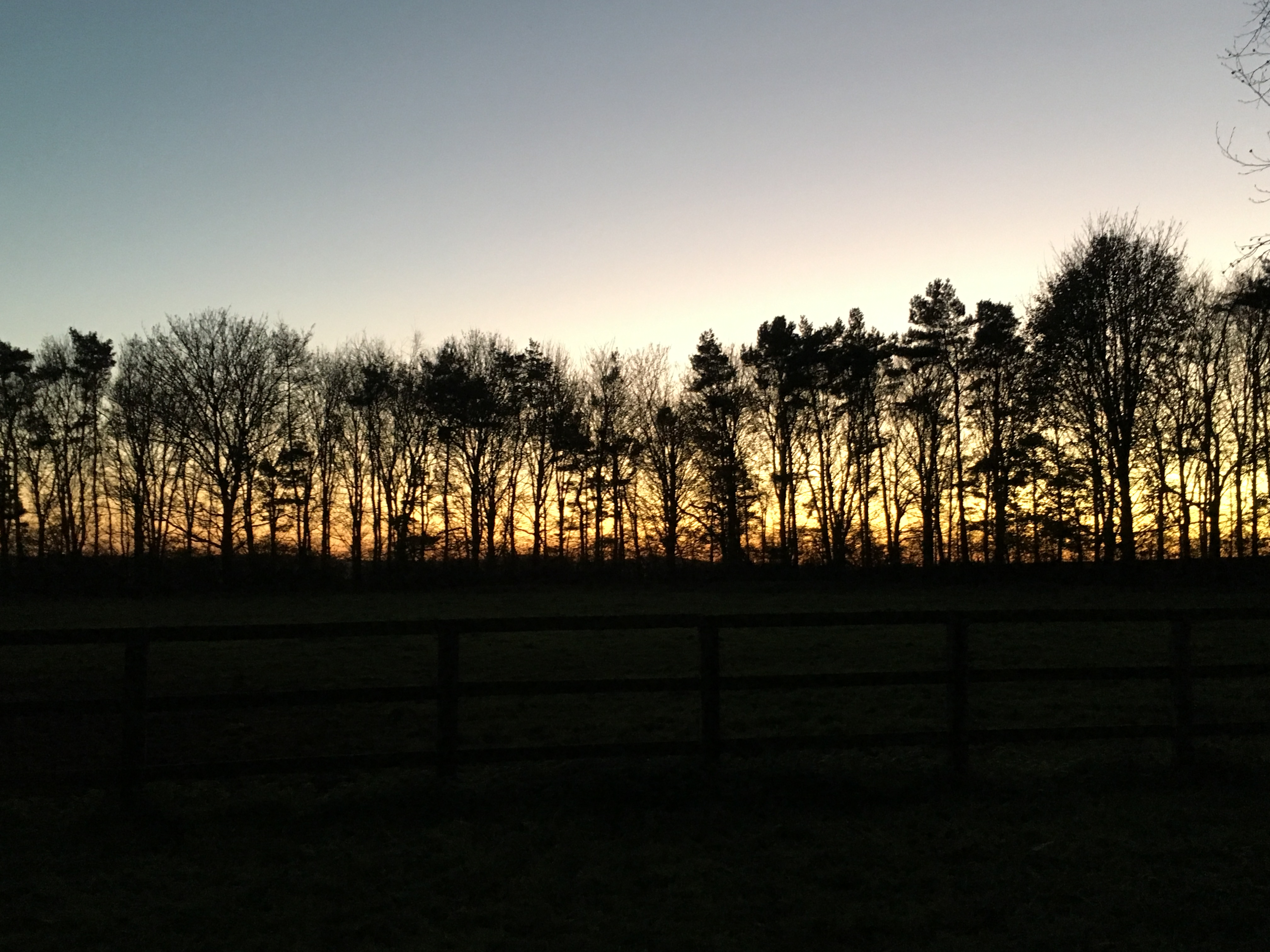 Wood Sunset